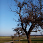Baum - Mond - Aufnahme